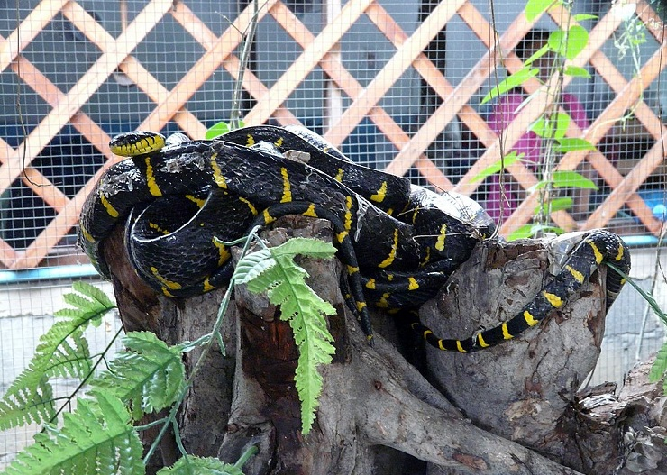 Змеиная ферма в Таиланде